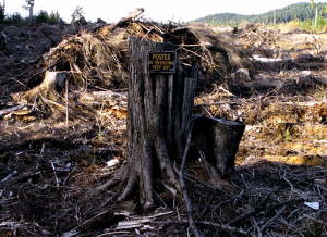 Picture of Tree Stump in Oregon