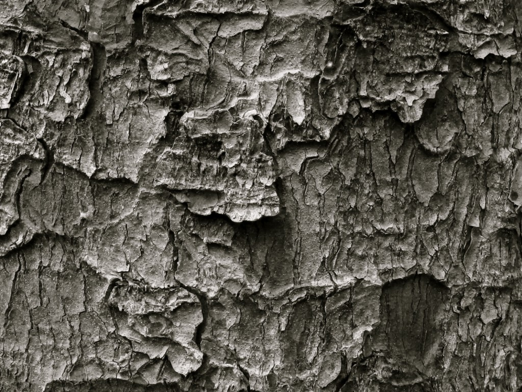 black and white close up of tree bark
