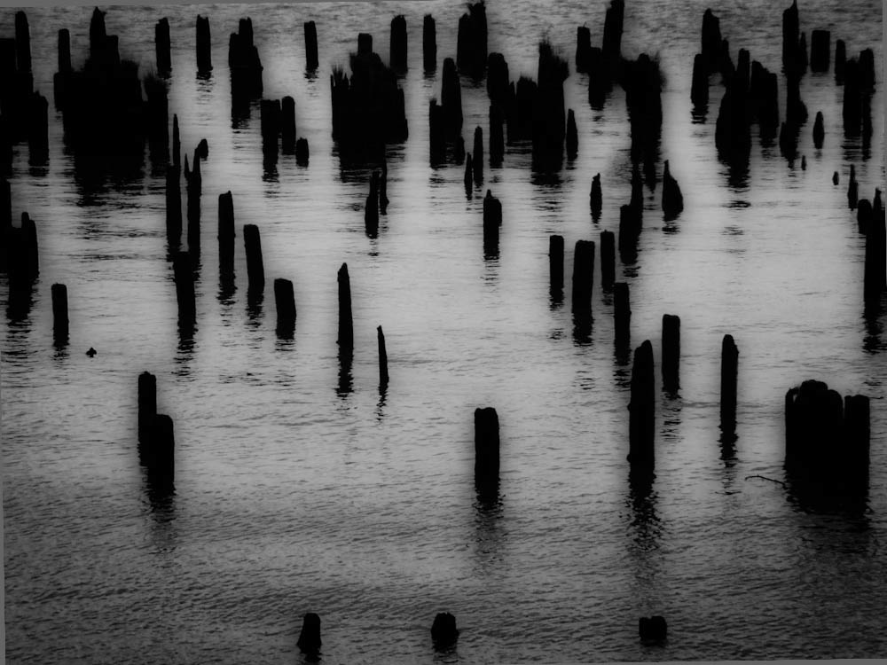 Pilings on the Columbia River
