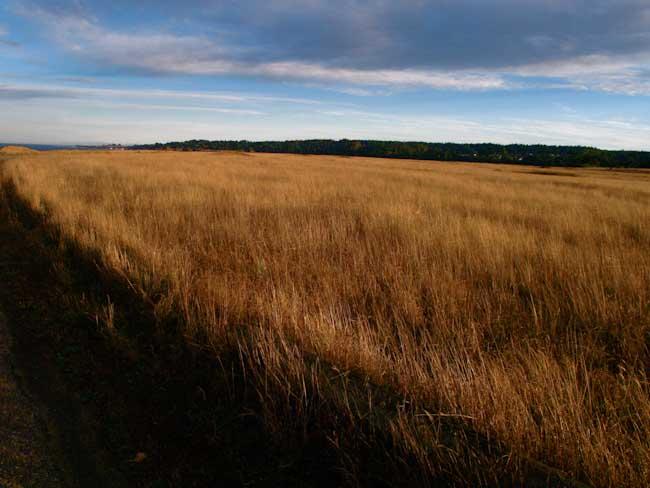 color photo of grasses mendocino headlands