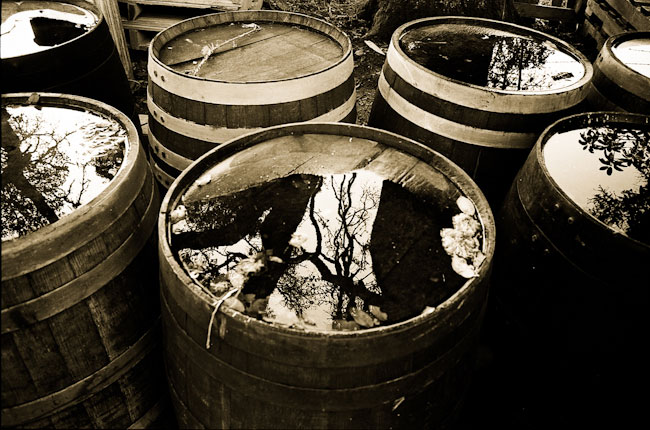 toned b&w photo of tops of wine barrels with rain water