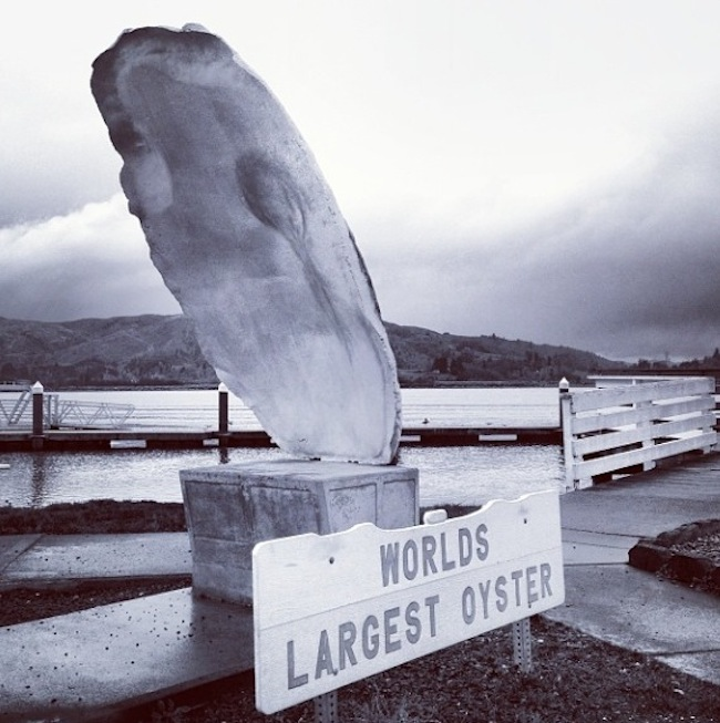world's biggest oyster
