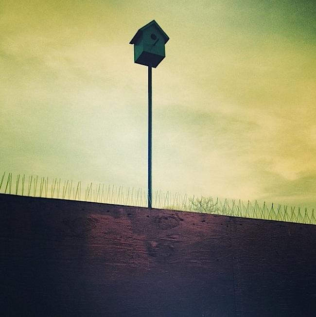 birdhouse, seattle