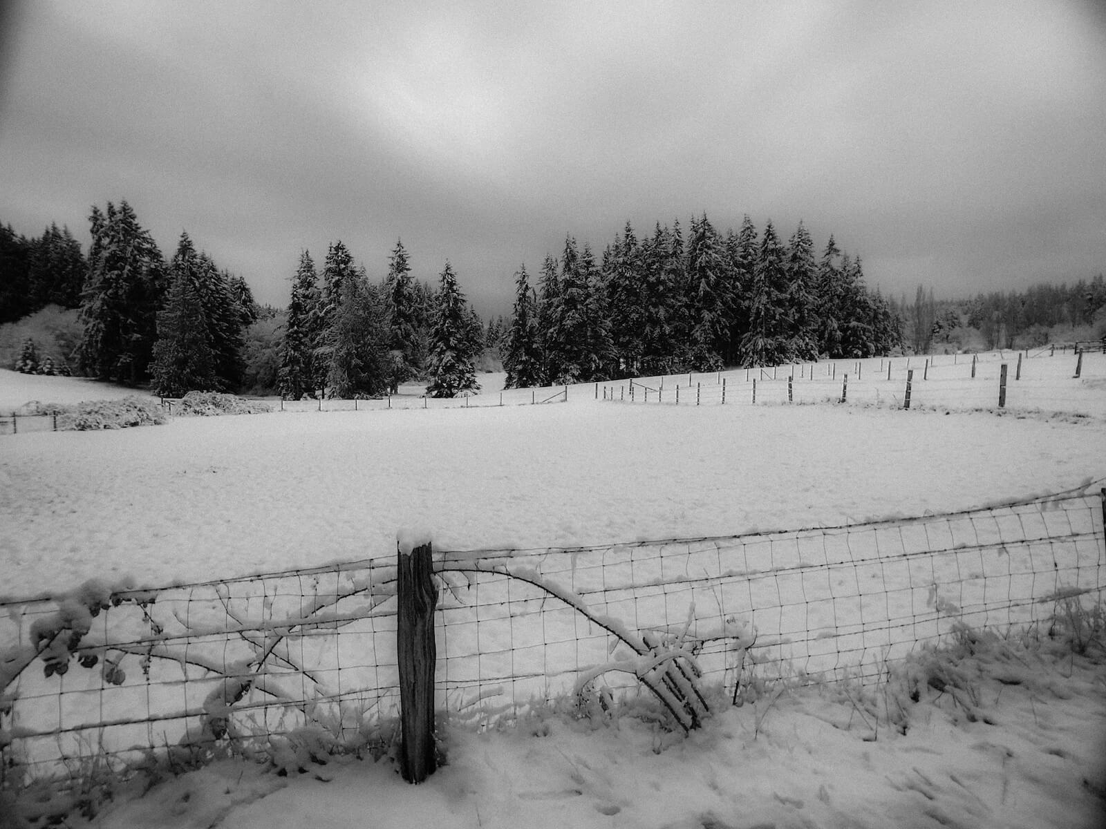 snowscape on whidbey island with trees